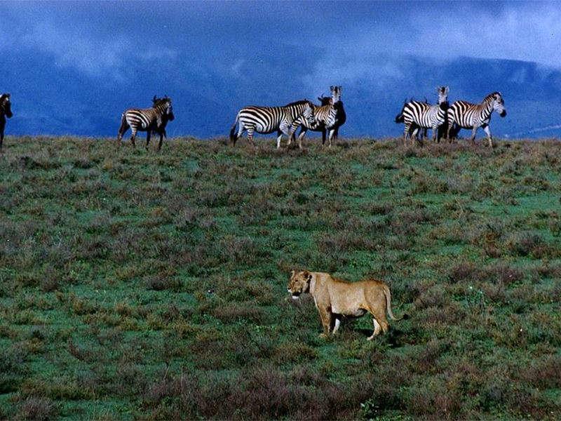 A Safari 09