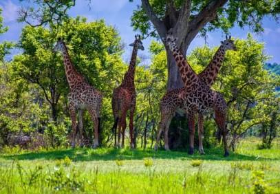 6 Days Northern Circuit Tanzania Safari