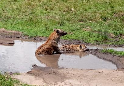 2 Days Masai Mara Safari