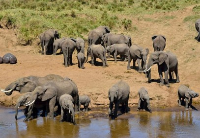 5 Days Northern Tanzania Safari
