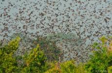 6 Days Bat Migration Safari in Kasanka National Park