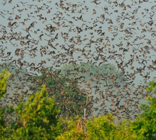 6 Days Bat Migration Safari in Kasanka National Park