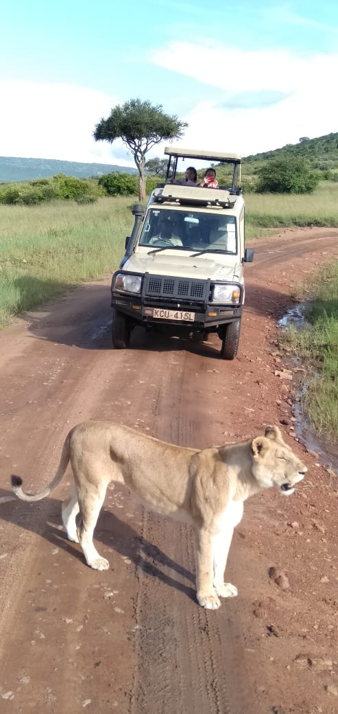 Lion Infront Of Jeep