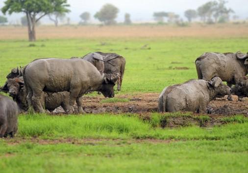 Mikumi National Park Safari Tours