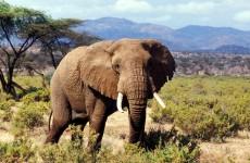 6-Day Kenya National Parks