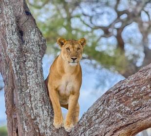 3-Day Tarangire, Lake Manyara & Ngorongoro Safari