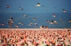 5 Days Safari to Lake Nakuru, Lake Naivasha, Maasai Mara