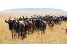 5-Day Northern Tanzania Safari