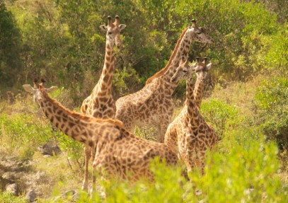 Tanzania – Frequently Asked Questions