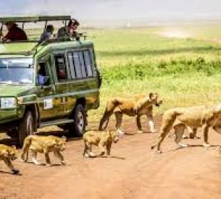 2-Day Short Amazing Tanzania Safari