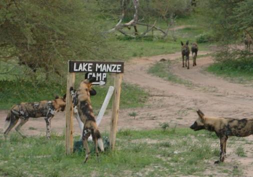 Lake Manze Selous Wildlife (7) 1920x864