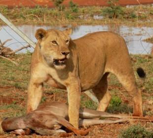 9-Day Kenya Safari Experience