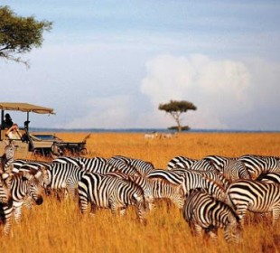 7-Day Northern Kenya & Lakes Safari
