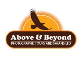 Above & Beyond Photographic Tours and Safaris