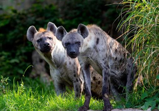 5a3bea4f0252f900015da576 Safari Serengetti