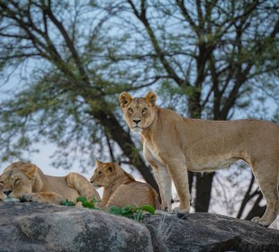 7-DayCamping Safari