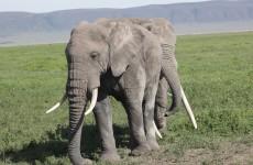 4 Days Camping Safari to Tarangire, Serengeti & Ngorongoro