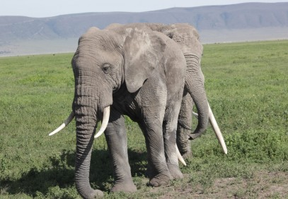 4 Days Camping Safari to Tarangire, Serengeti & Ngorongoro