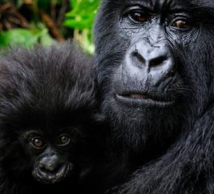 3-Day Gorilla Trekking Tour Uganda
