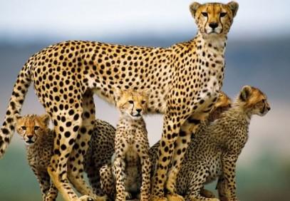 3-Day Lodge Safari to Tarangire, Ngorongoro and Manyara