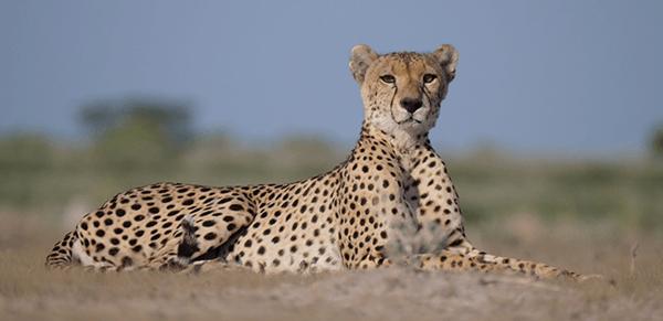 Central Kalahari Game Reserve 1