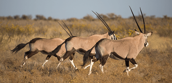 Central Kalahari Game Reserve 2
