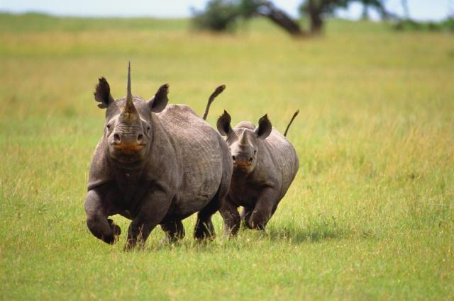 Destination Ngorongoro