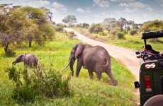 4-Day Tarangire, Serengeti & Ngorongoro