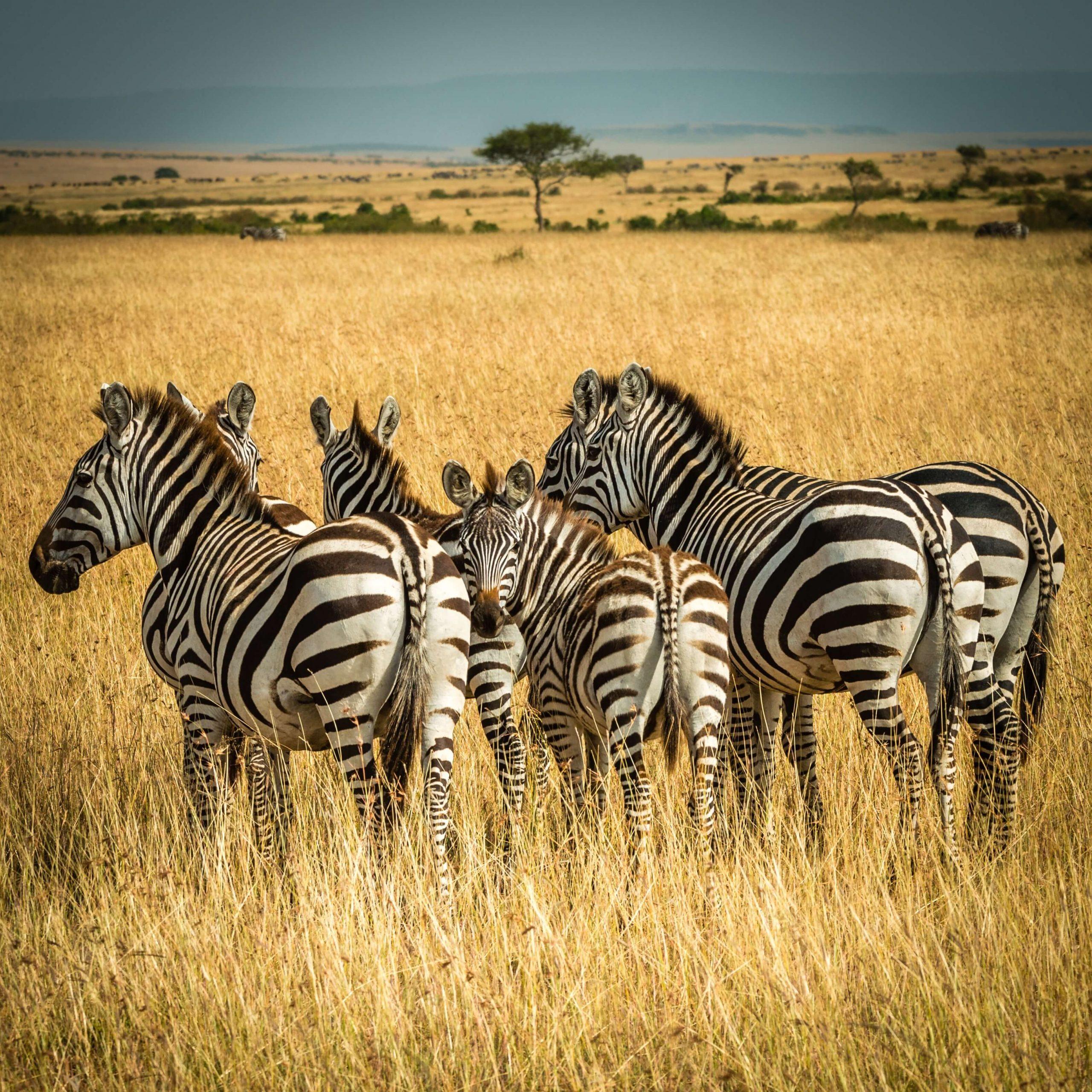 Expect In Africa Safari Photo