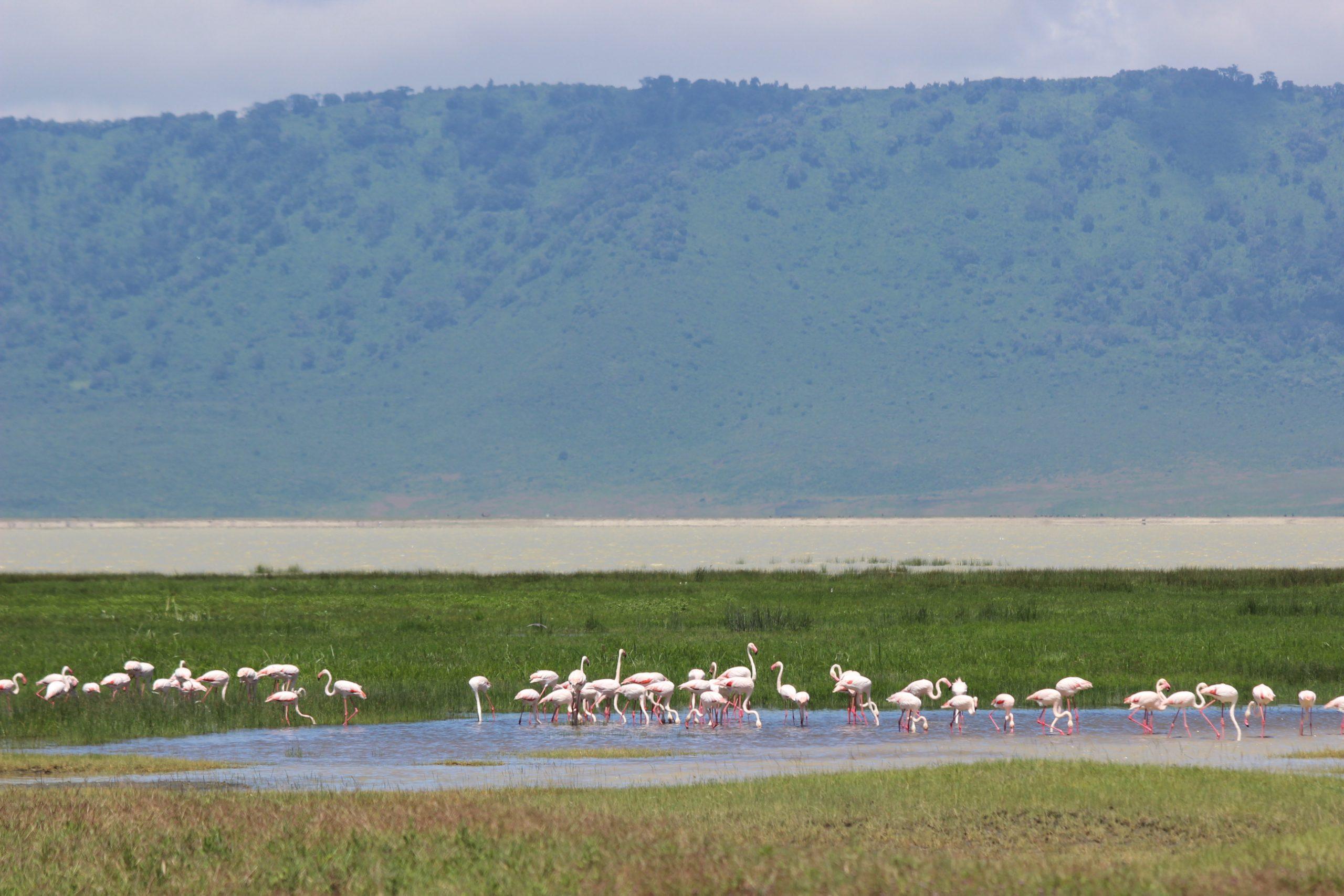 Joagro Safaris Tanzania Ltd (6)