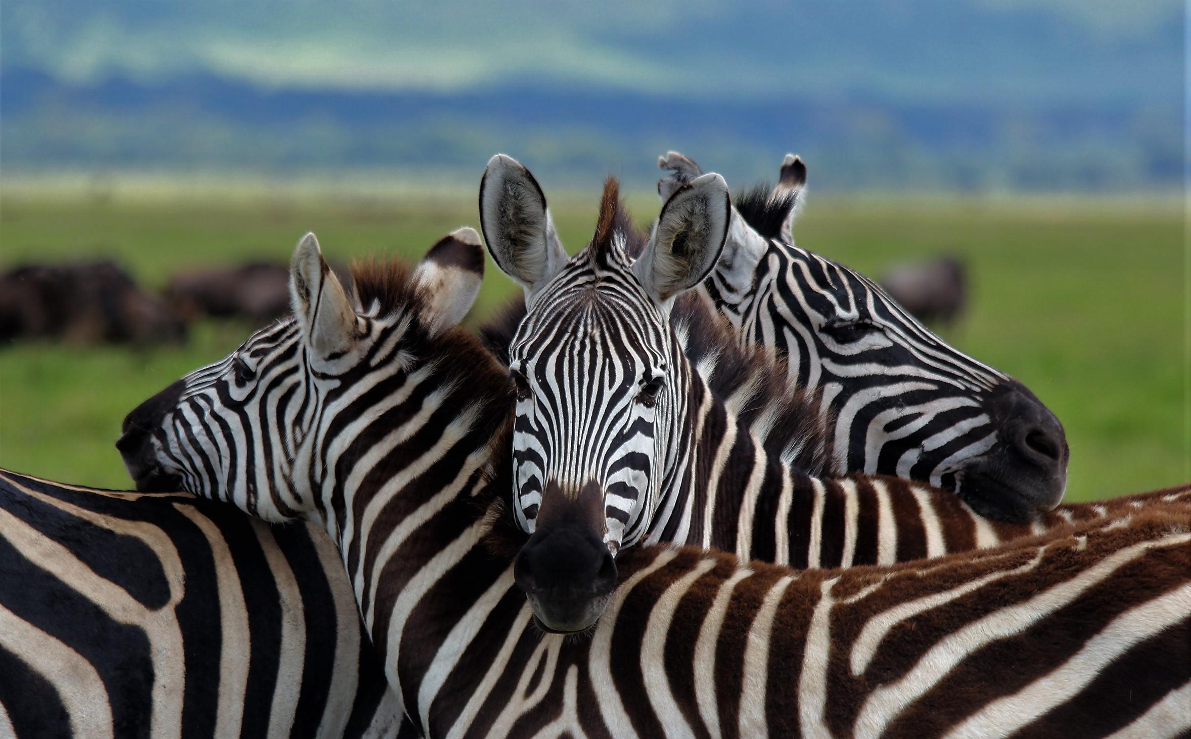 Joagro Safaris Tanzania Ltd (7)