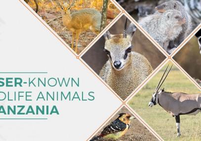 Lesser-Known Wildlife Animals in Tanzania
