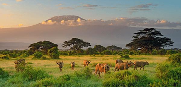 Mount Kilimanjaro National Park 1