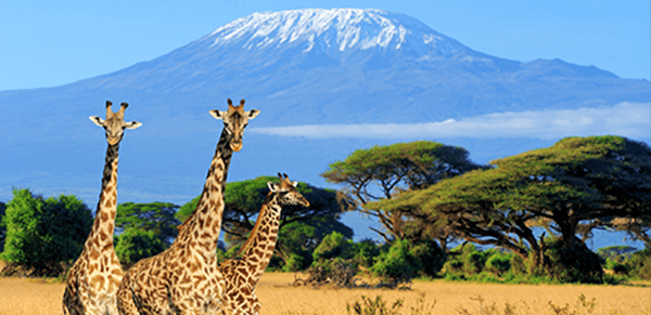 Mount Kilimanjaro National Park 2