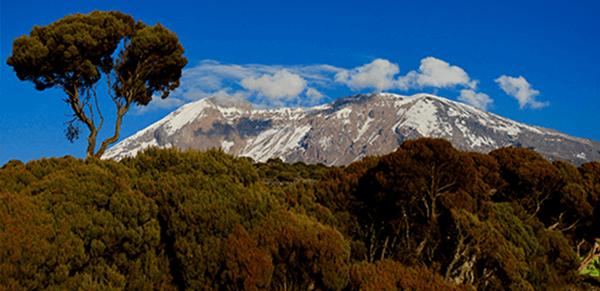 Mount Kilimanjaro National Park 3