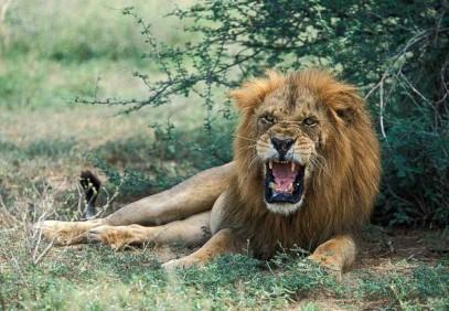 3-Day Murchison Falls & Ziwa Rhino Sanctuary