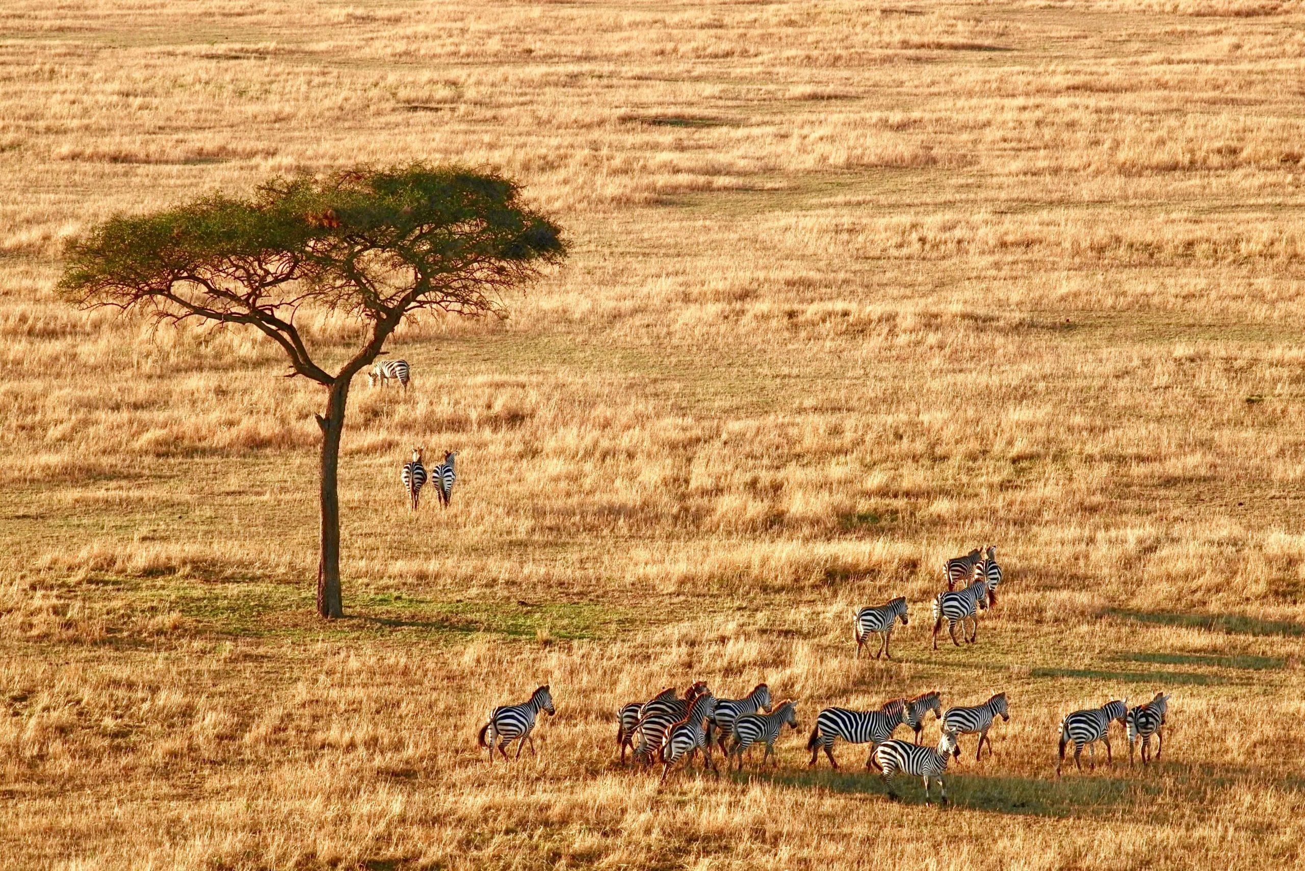 Photo Expect In Africa Safari 1