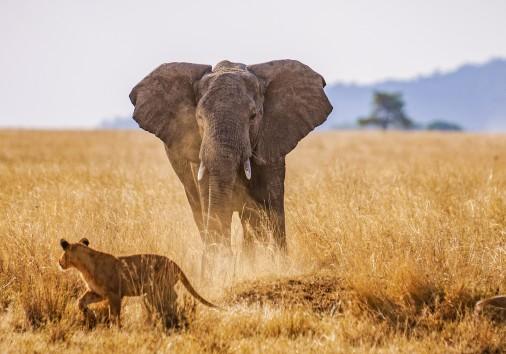 Serengeti Tembo