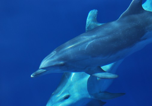 Swimming With Dolphins(1)
