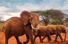 3-Day Tsavo East & Amboseli Safari