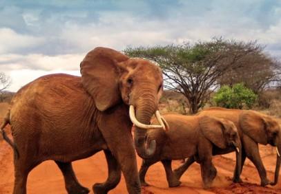 3-Day Tsavo East & Amboseli Safari