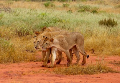 5-Day Tsavo & Taita Sanctuary Safari