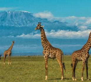 6-Day Kenya Parks Safari