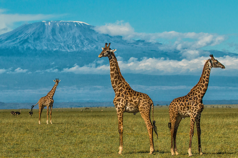 Amboseli And Chyulu Hills Featured Image