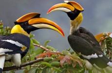 13 Days Uganda Wildlife and Birding Safari
