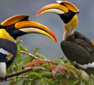 13 Days Uganda Wildlife and Birding Safari