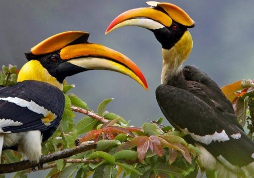 Index Birding