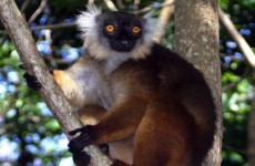 6-Day Madagascar Coral & Forest Safari