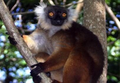 6-Day Madagascar Coral & Forest Safari