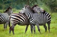 14 Days Luxury Family Uganda Special